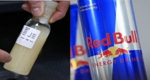 did-you-know-your-energy-drinks-contain-bull-urine-semen